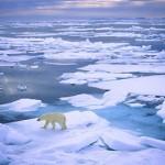 Западные компании нашли способ обойти санкции для работы в Арктике