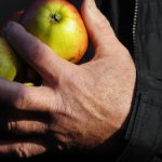 СМИ: Британские фермеры разоряются из-за российских санкций