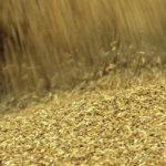 РЖД ограничили отправку зерна на экспорт