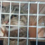Кошка Матроскина получит аккаунты в Instagram и Twitter