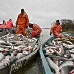Камчатка вышла в лидеры по инвестициям в рыбную отрасль и вылову рыбы