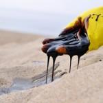 Снижение цен на нефть увеличивает значимость трейдеров