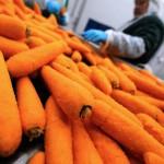 Во Владивостоке появилась морковь по 2500 рублей за кг