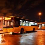 В Рождественскую ночь автобусы в Петербурге будут ходить по 11 маршрутам