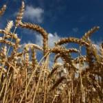 В Госдуме предлагают лишить правительство права вводить продовольственное эмбарго
