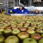 Россельхознадзор пустил молдавские яблоки в Россию