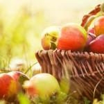Россельхознадзор вернул Польше яблоки, а Белоруссии— мясо