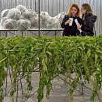 Грузия и РФ договорились о поставках зелени